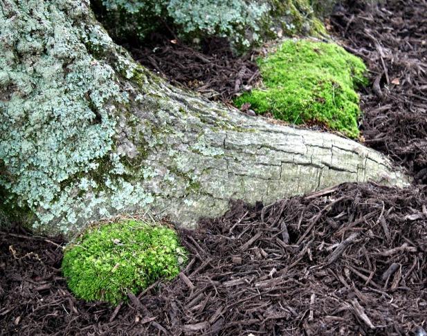 oaks3