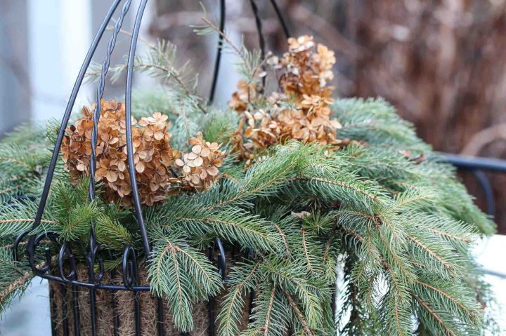 pines on thedeck